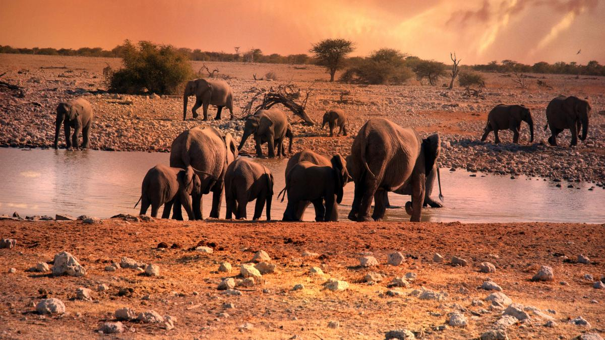 A herd of elephants standing next to a body of water